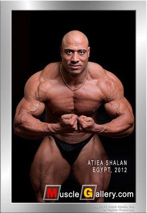 MuscleGallery Atiea Shalan