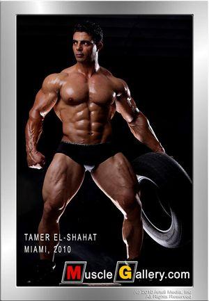 MuscleGallery Tamer El Shahat