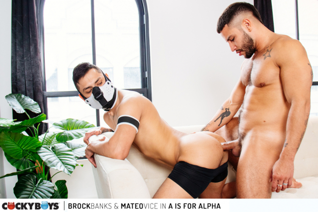 Brock banks-mateo vice _a is for alpha_-11