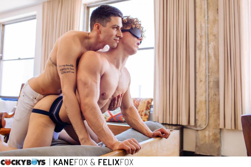 Kane fox-felix fox-2346