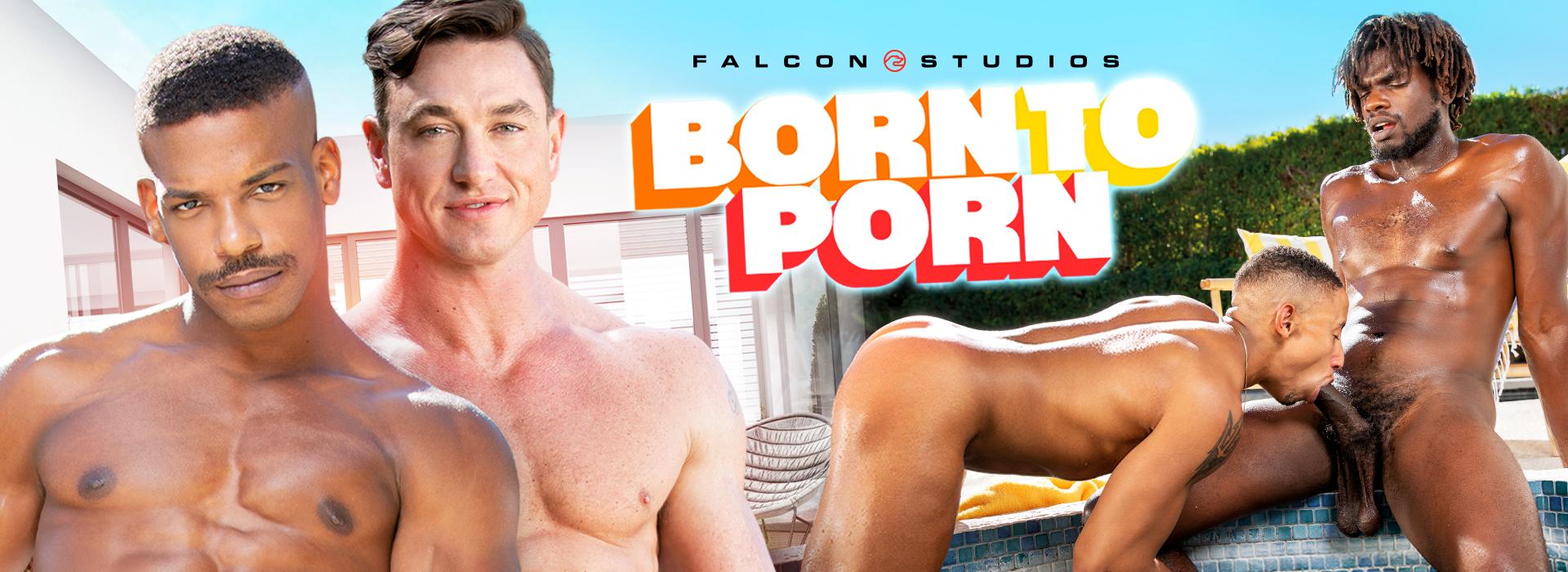 Falcon Studios Born to Porn